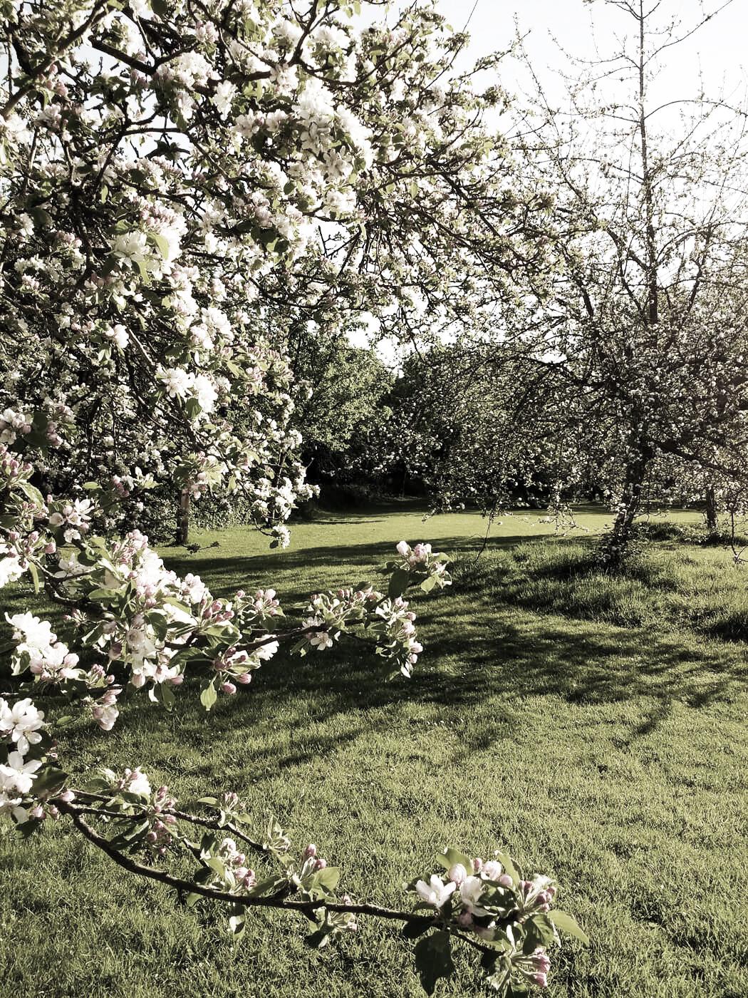 Bromsgrove Festival open-air Shakespeare at Avoncroft Museum