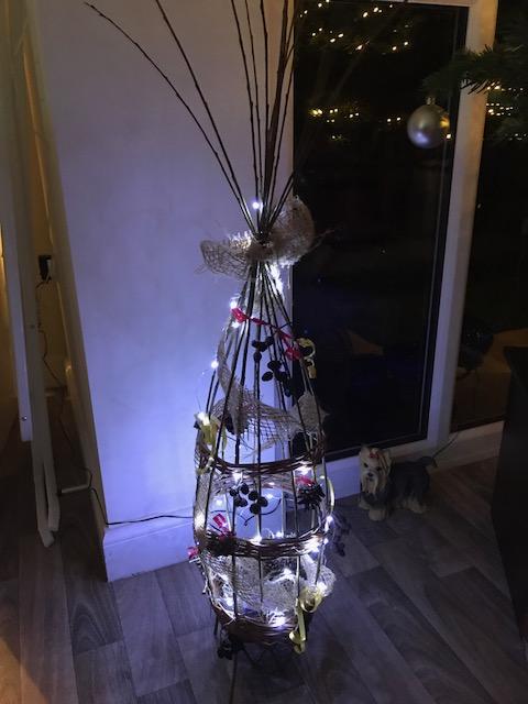 Christmas Tree Willow – December 2019