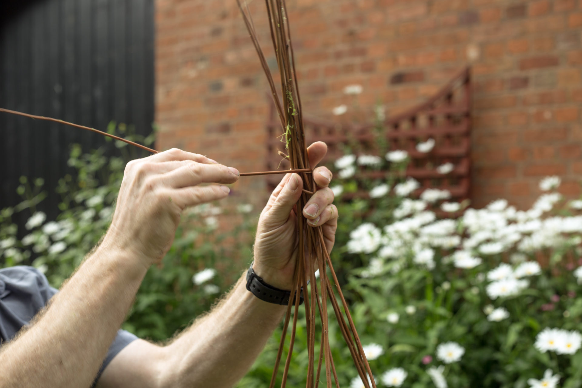 Garden Willow Weaving March 2020 – Morning